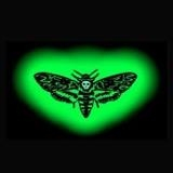 Foto band emergente Moth's Circle Flight